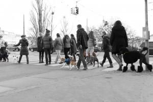doggydate-