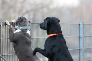 doggydate-4413