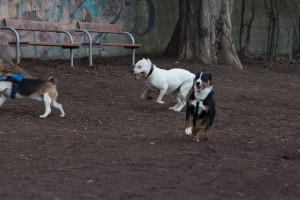 doggydate-4429
