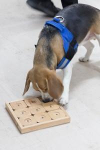 doggydate-4498