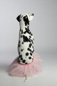 Doggy Date-Romy 11