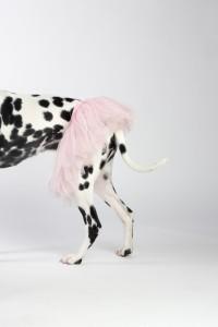 Doggy Date - Romy 13