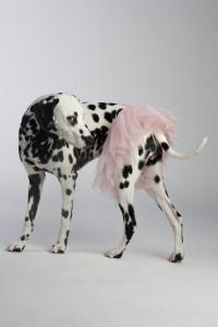 Doggy Date-Romy 14