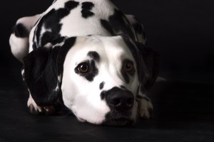 Doggy Date-romy-4955