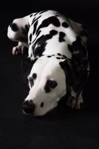 Doggy Date-romy-4961