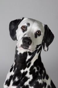 Doggy Date-romy-4995