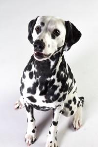 Doggy Date-romy-5001