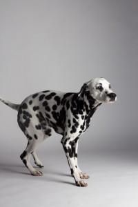 Doggy Date-romy-5019