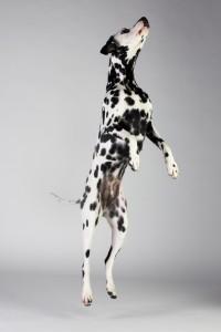 Doggy Date-romy-5022