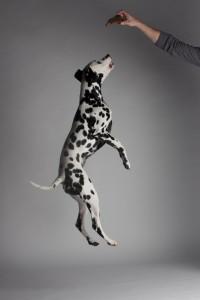 Doggy Date-romy-5036