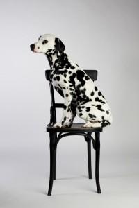 Doggy Date-romy-5059