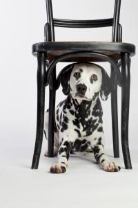 Doggy Date-Romy-5087
