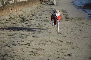 Tollen am Strand vom Portoroz