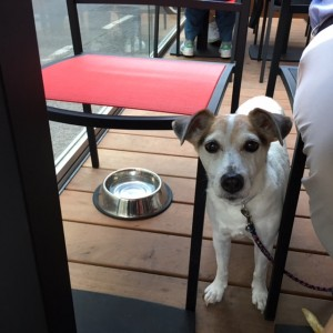 Doggy Date_Yori