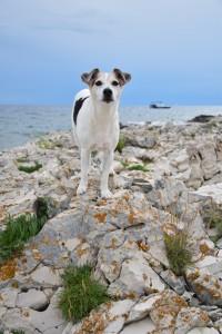 DoggyDate_Kroatien2016_25