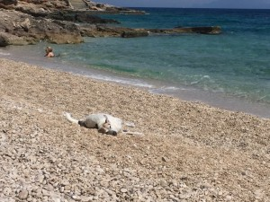 DoggyDate_Kroatien2016_27