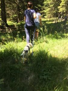 Wandern in Rogla