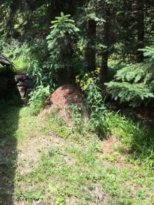 Waldameisenhügel neben dem Haus