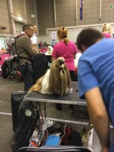 Dogge Date_Du & das Tier 2016_22