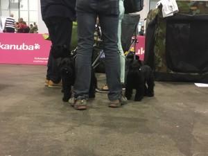 Dogge Date_Du & das Tier 2016_18