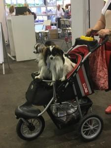 Dogge Date_Du & das Tier 2016_31