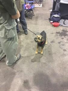 Dogge Date_Du & das Tier 2016_30