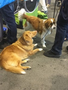 Dogge Date_Du & das Tier 2016_17