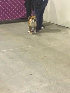 Dogge Date_Du & das Tier 2016_12