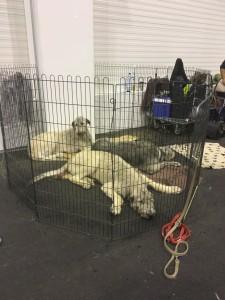 Dogge Date_Du & das Tier 2016_11