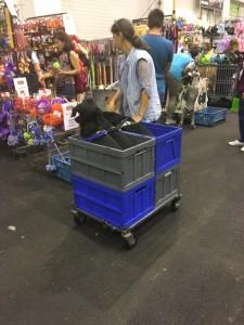 Dogge Date_Du & das Tier 2016_28