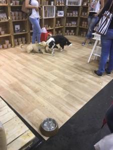 Dogge Date_Du & das Tier 2016_07