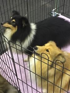 Dogge Date_Du & das Tier 2016_05
