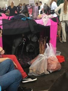 Dogge Date_Du & das Tier 2016_25