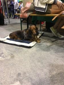 Dogge Date_Du & das Tier 2016_23