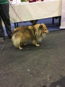 Dogge Date_Du & das Tier 2016_02