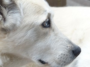 dog-186222_1920