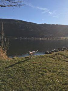 doggydate_kaernten21